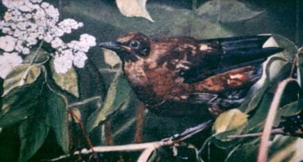 Zum Vogelnest